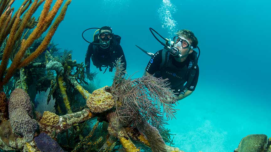 Diving day trip in phuket, corals and sea life exploration in Thailand