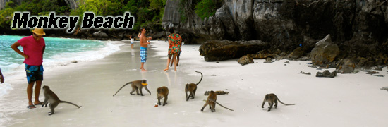 Monkey beach phiphi