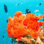 meilleur site de plongée phuket