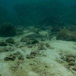 Plongée requin pointe noir Phiphi