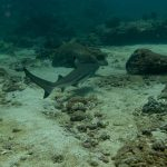 Plongee requin pointe noir palong wall Phiphi