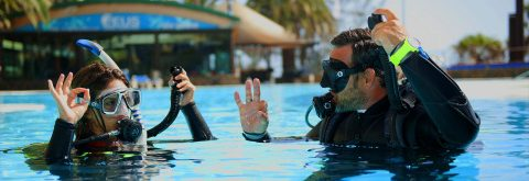 Obtain Your PADI Certification