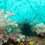 épave king cruiser corail mou