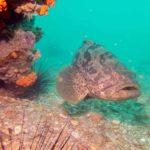 mérou plongée phuket épave