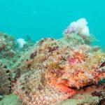 plonger king cruiser phuket