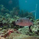 Dive site phiphi thailand
