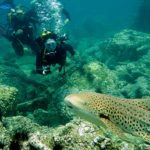 leopard shark diving phuket hin bida