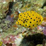 plongée découverte Phuket