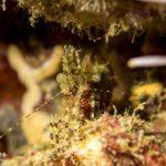 plongée sur mur crevette