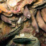 plongée phuket murènes