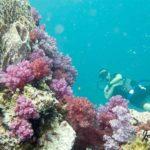 sortie plongée Phuket Shark point
